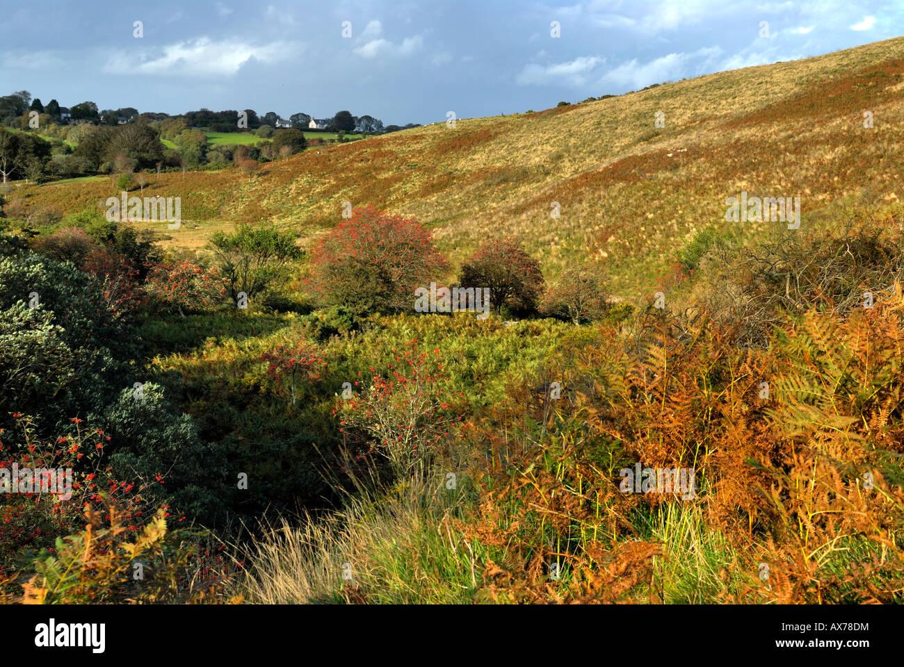 Belstone Common. Dartmoor National Park - Stock Image