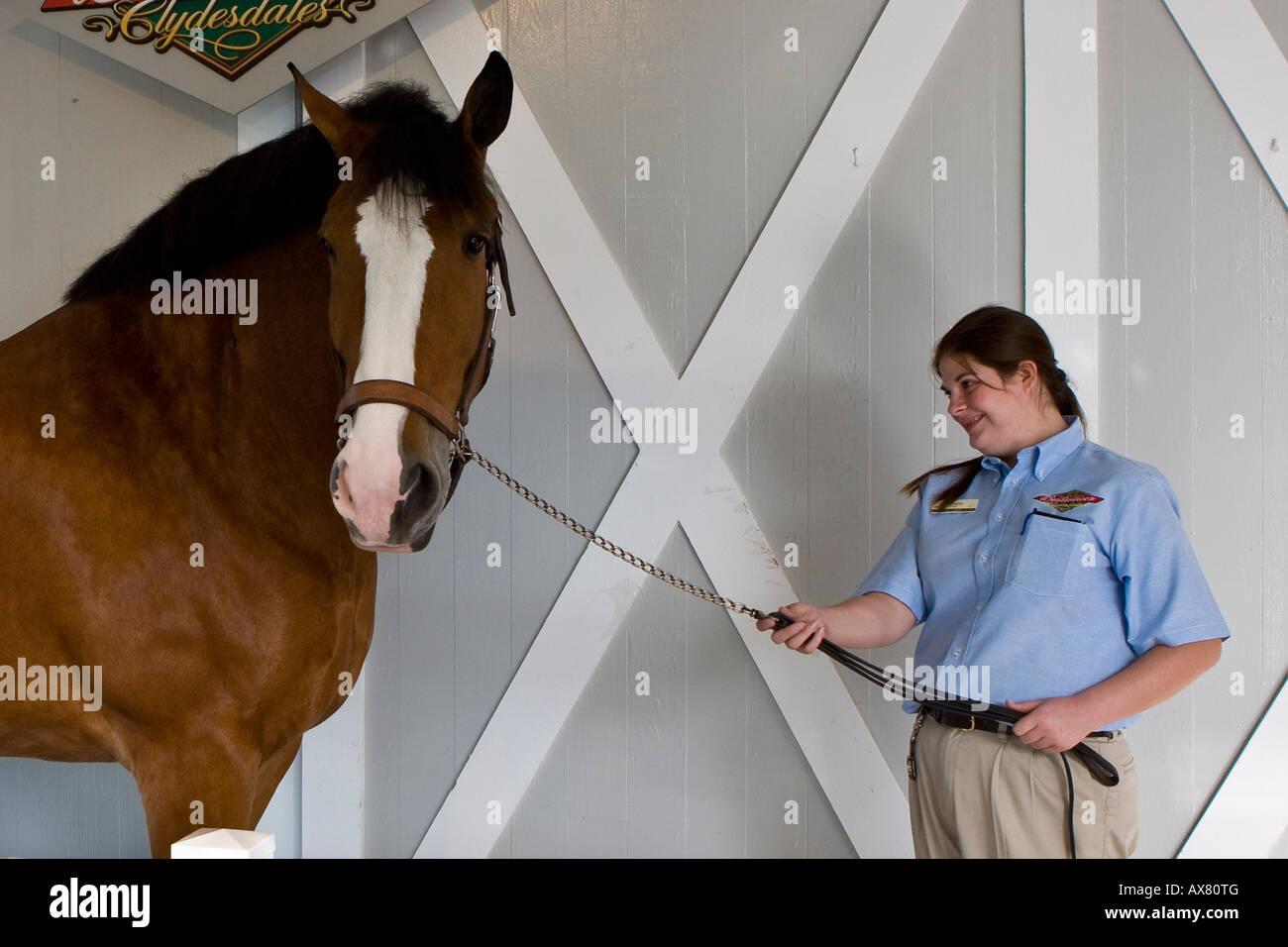Anheuser Busch Family Stock Photos & Anheuser Busch Family