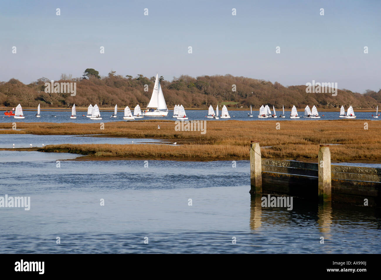 Dinghies sailing on the Lymington River with safety boat, Hampshire - Stock Image
