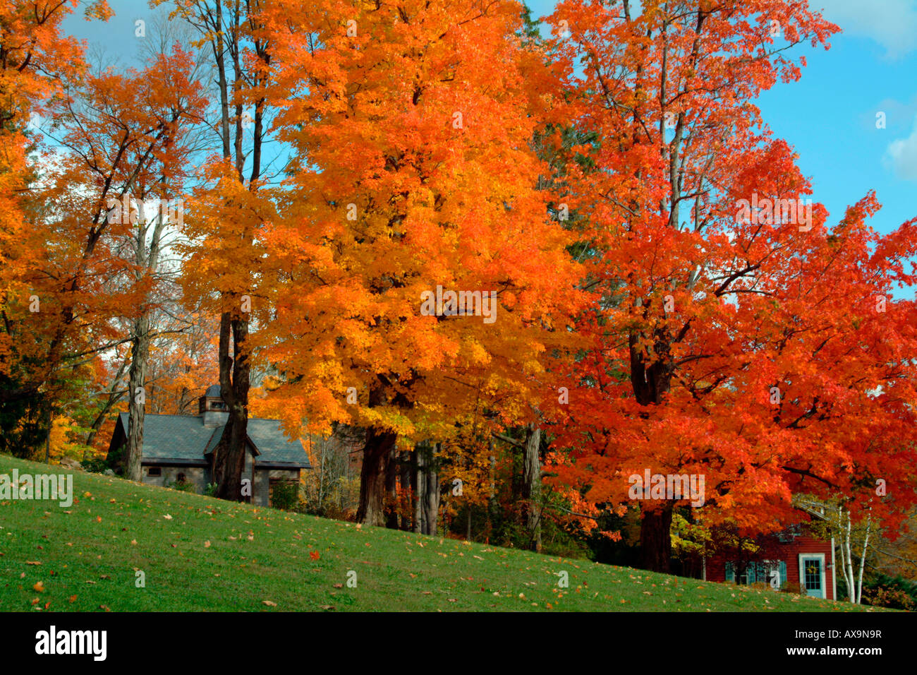 Luminous Fall foliage dominating New England houses - Stock Image