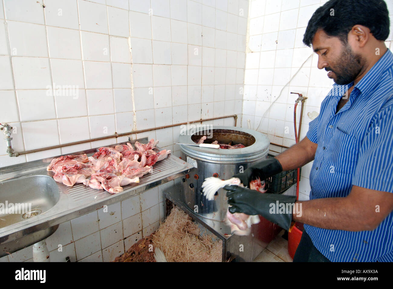 A butcher plucking a slaughtered chicken in a butchery in Doha, Qatar. Stock Photo