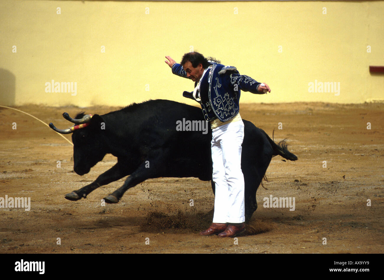 Man bullfighting, Ecarteur, Course Landaise, an ancient form of bullfighting that does not involve any blood shed, Stock Photo