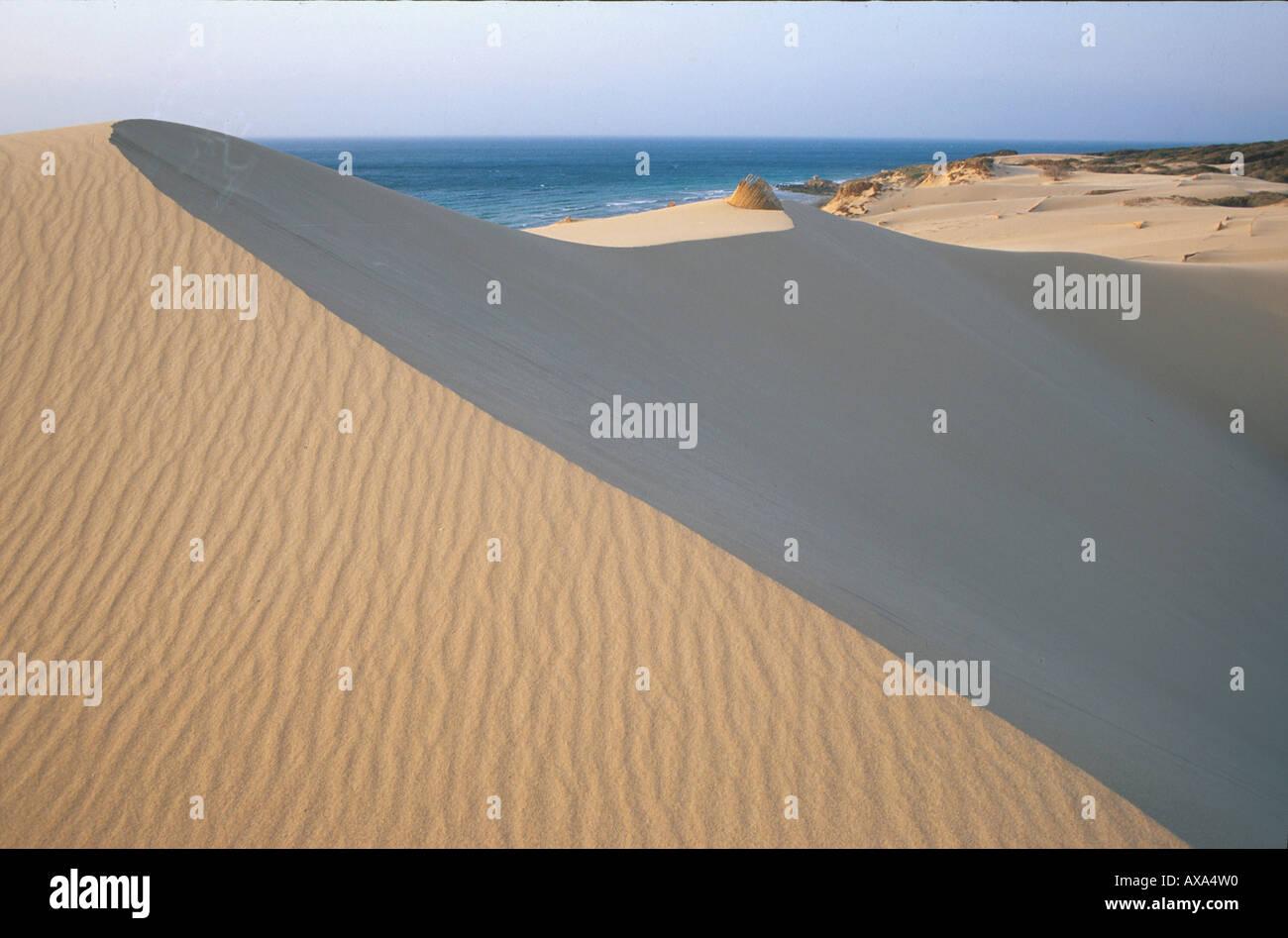 Duenen von Punta Paloma, Tarifa, Costa de la Luz, Cádiz, Andalusien Spanien, Europa - Stock Image