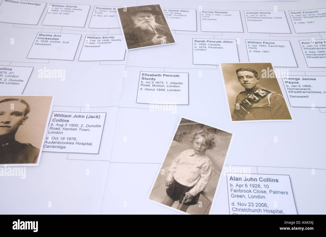 Family Tree - Stock Image