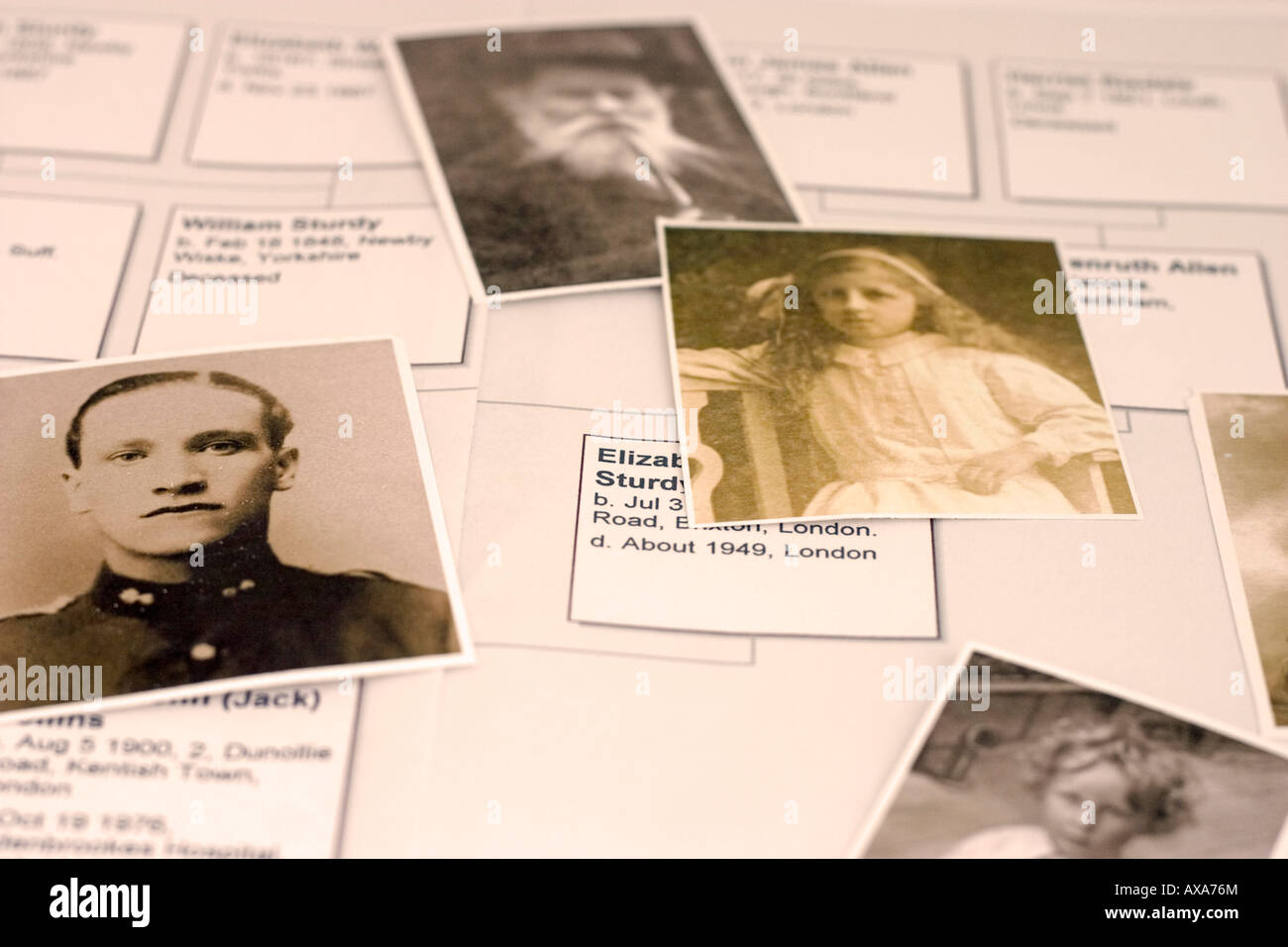 Family tree in closeup and sepia - Stock Image