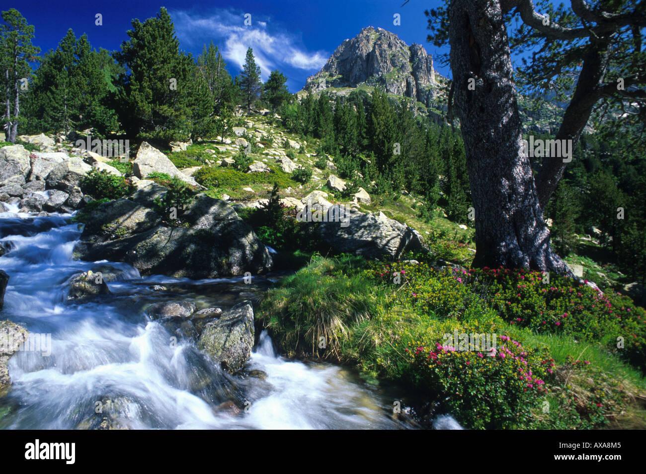Catalonian mountain landscape with mountain stream, Catalonia, Spain - Stock Image