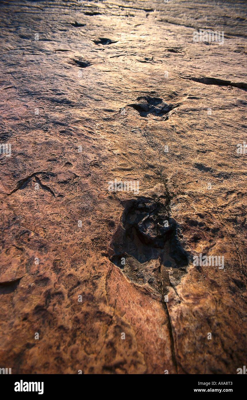 Fossilised dinosaur traces, Namibia, Africa - Stock Image