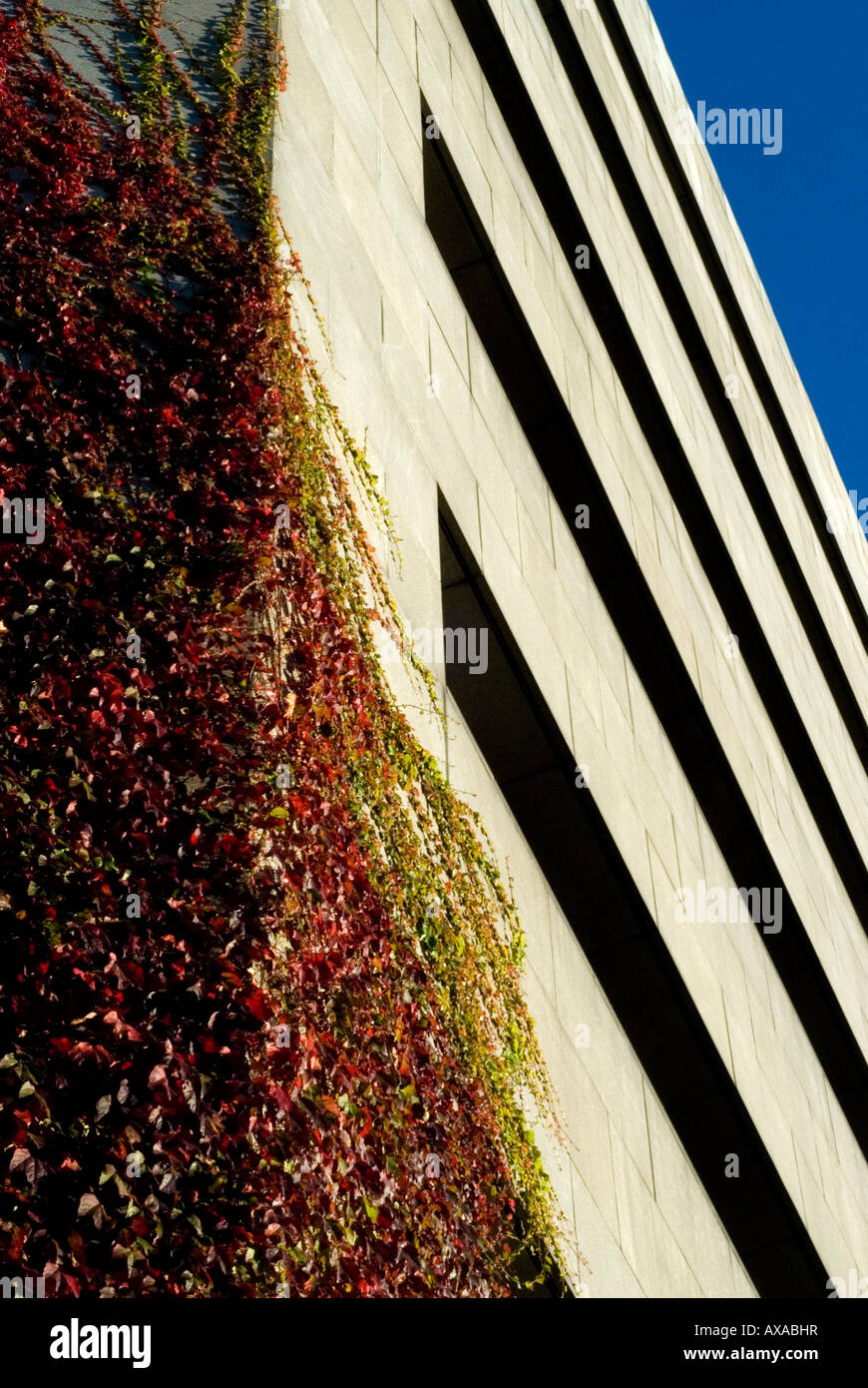 A corner of Wood Quay civic buildings in Dublin Ireland covered with ivy - Stock Image