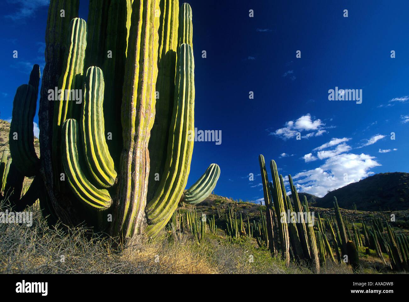 Isla Catalan Baja California, Mexiko - Stock Image