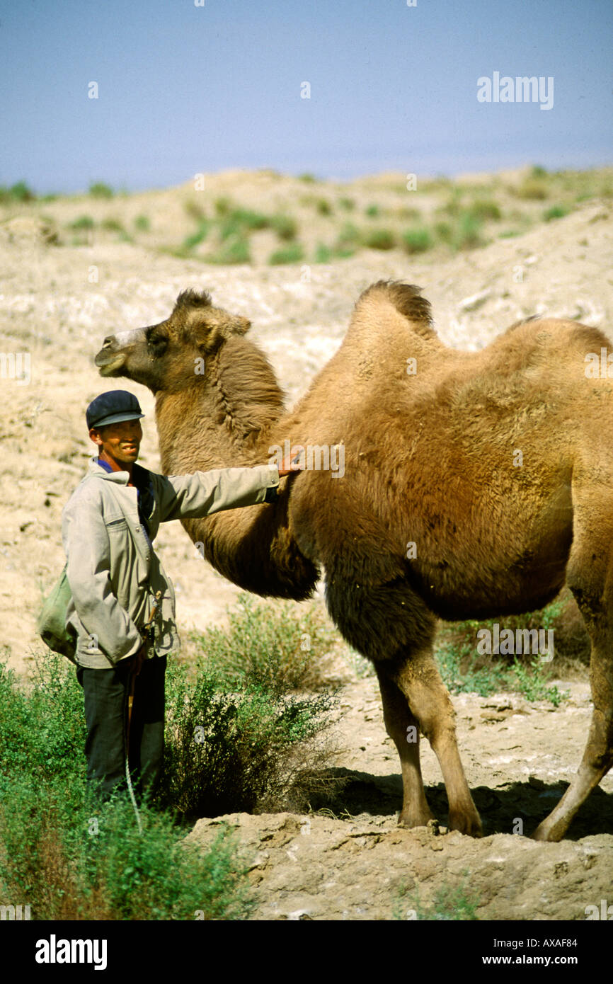 China, Dunhuang, Camelherder with camel Stock Photo