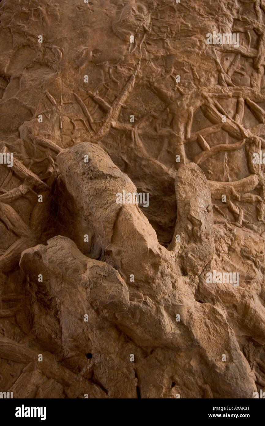 a dinosaur footprint in mud in utah - Stock Image