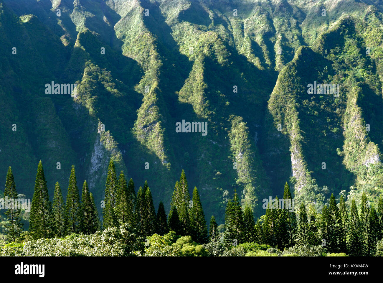 Ko'olau Mountain Range it s actually one long mountain is over 30 miles in length and peaks at 3,150 feet - Stock Image