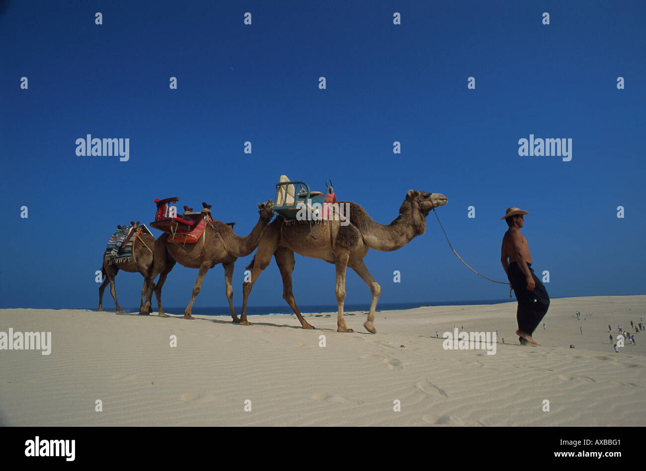 Kamelritt in den Duenen, Corralejo, Fuerteventura Kanarische Inseln, Spanien - Stock Image
