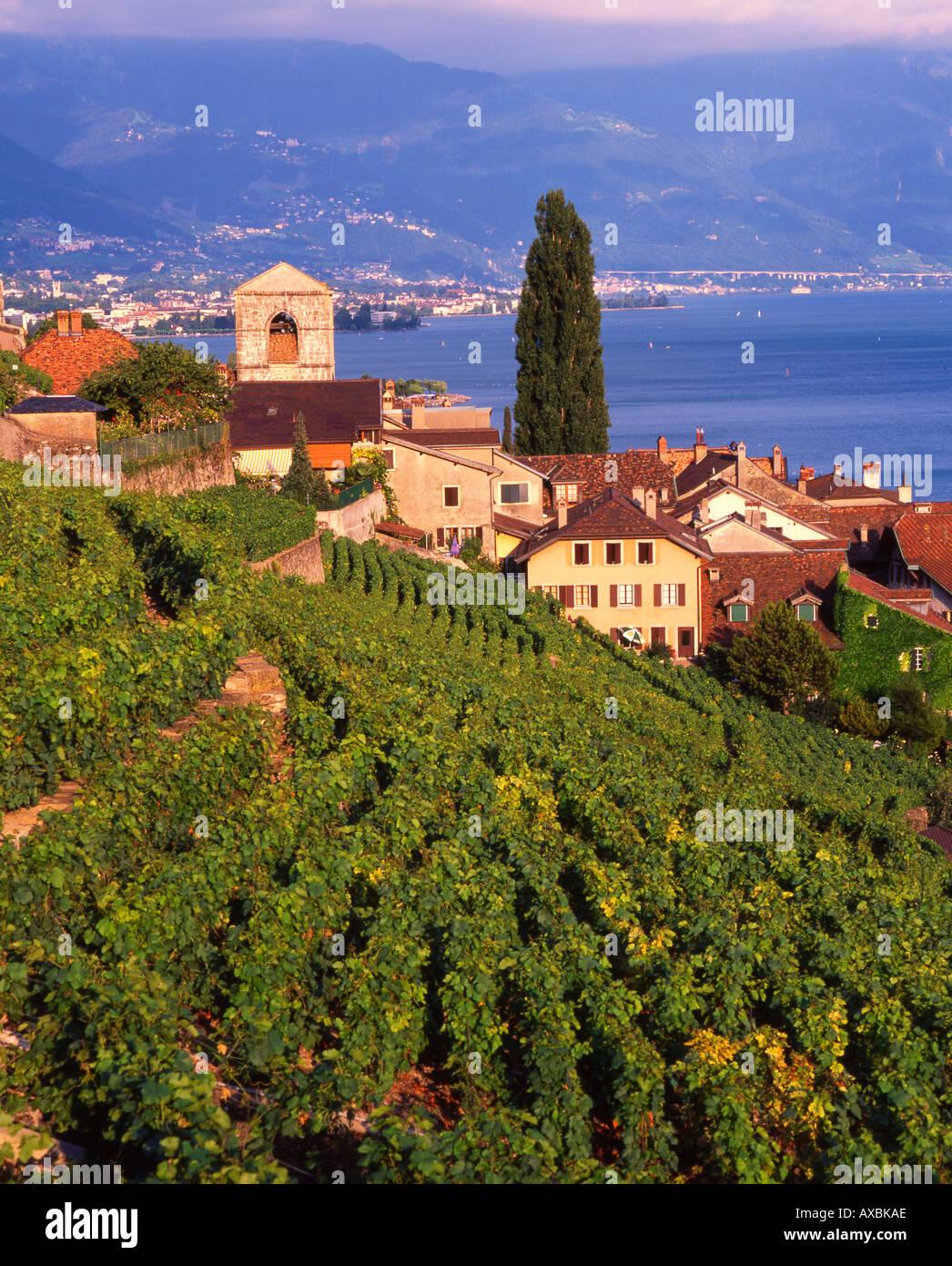 Switzerland Lac Leman St Saphorin terraced vineyard Stock Photo