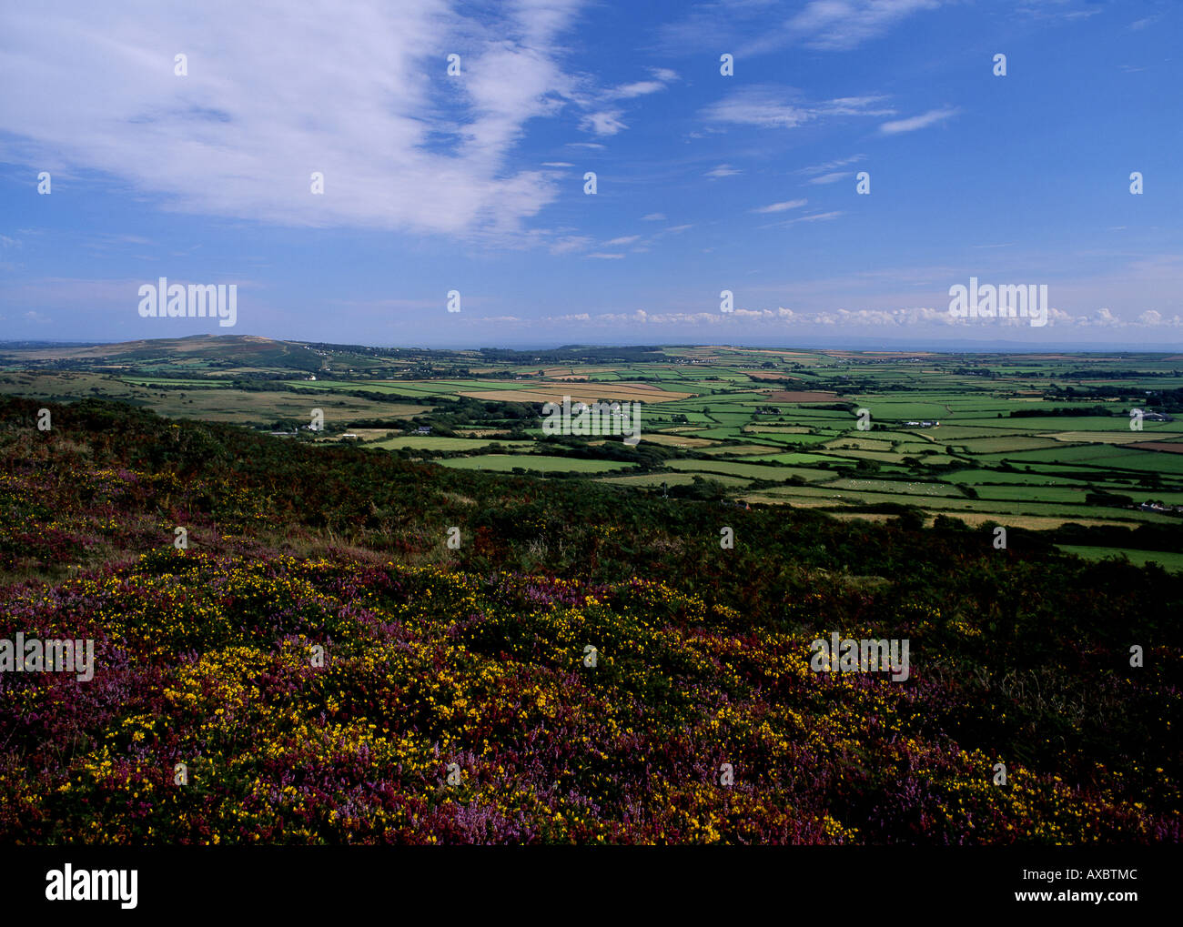 View from Llanmadoc Hill across north Gower Heather in foreground Gower Peninsula South Wales UK - Stock Image
