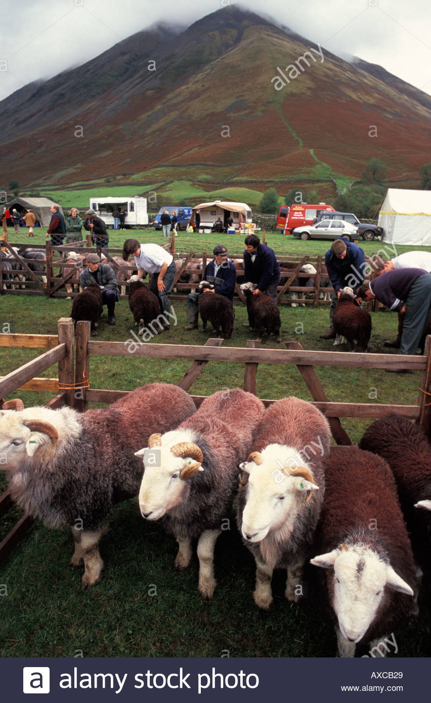 The Wasdale Shepherds Meet and Show takes place each October at Wasdale Head in Lake District, UK - Stock Image