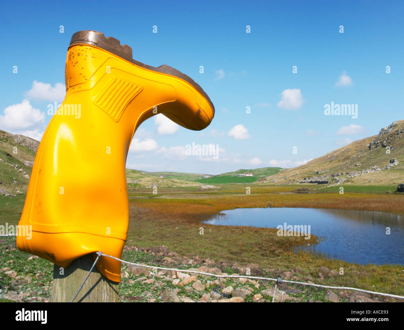Yellow Welly Boot Culswick Shetland Stock Photo