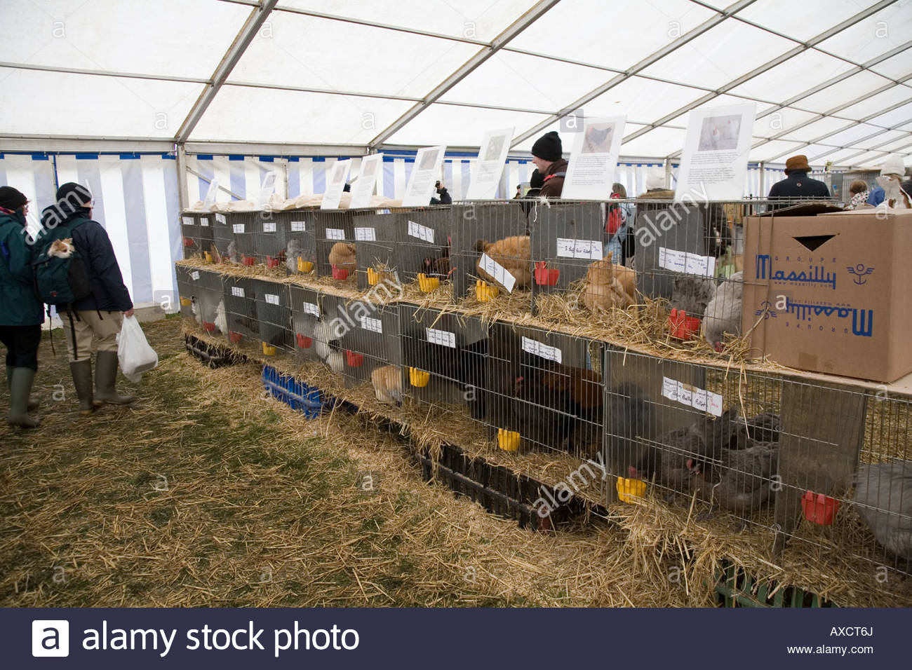 caged chickens for sale Thame Country Show 2008 - Stock Image