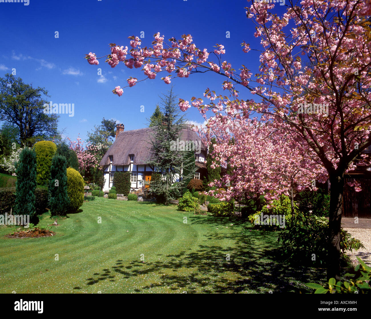 Emery Down - A New Forest cottage in Springtime - Stock Image