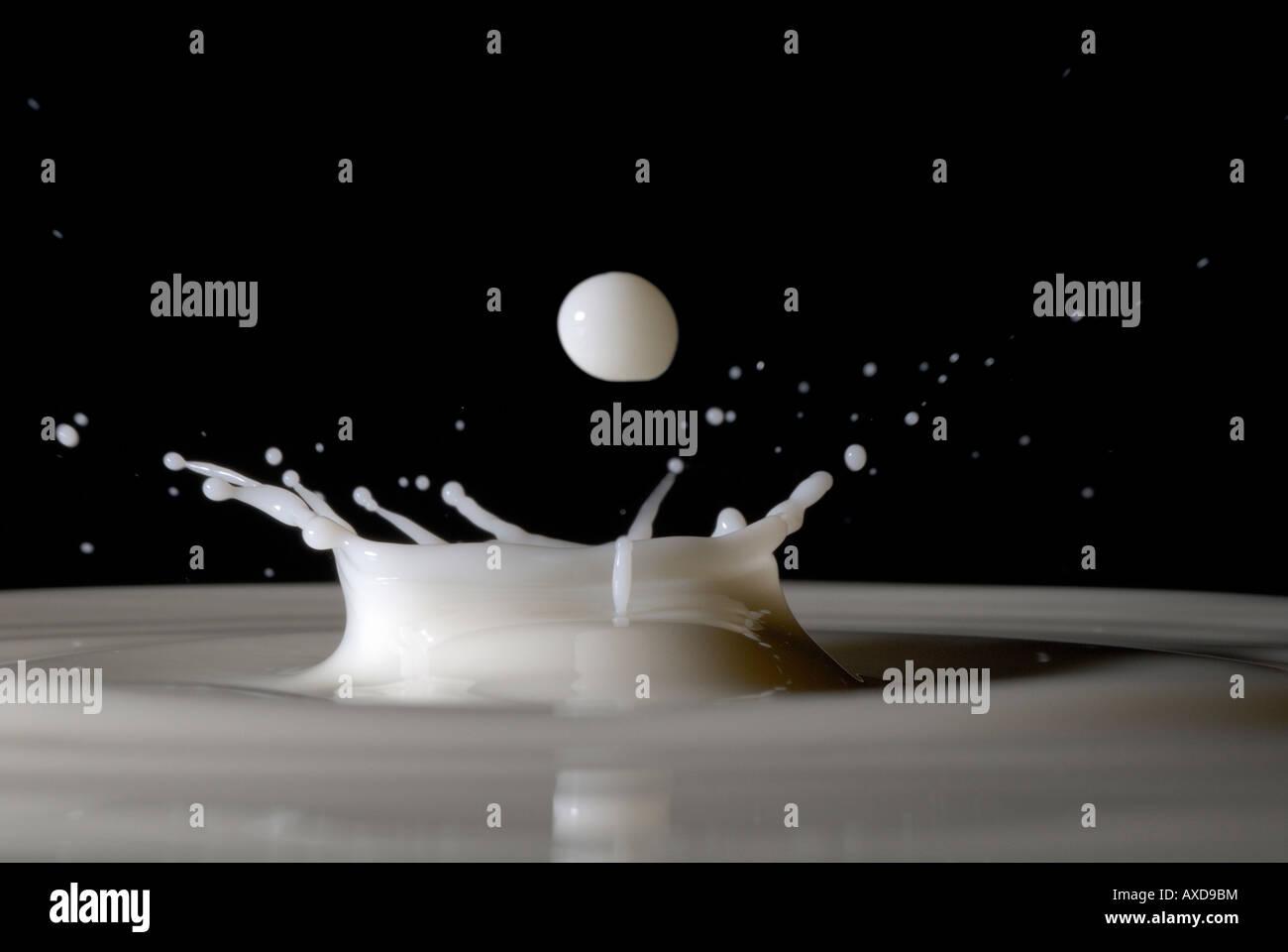Drops of milk splashing - Stock Image