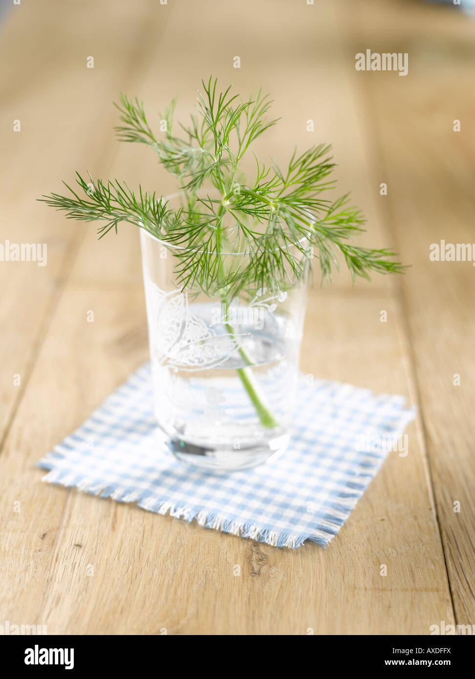 Dill in water glass (Anethum graveolens) - Stock Image