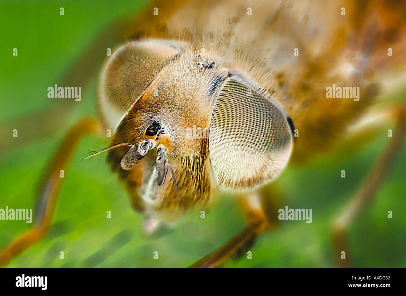 Electron Micrograph Style Image of the Compound Eyes of a Fly - Stock Image
