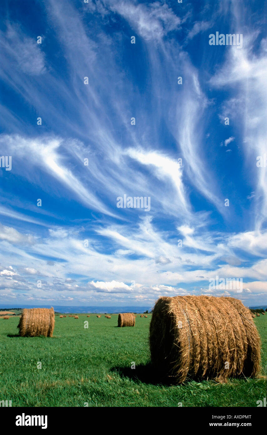 Hay bales in a field - Stock Image