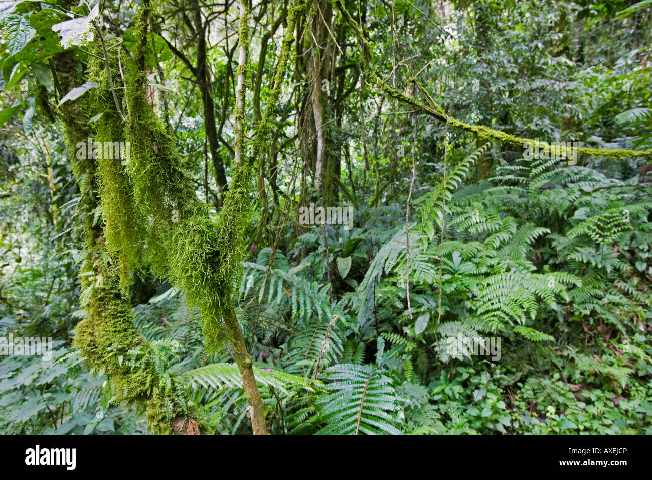What plants grow in the equatorial forests