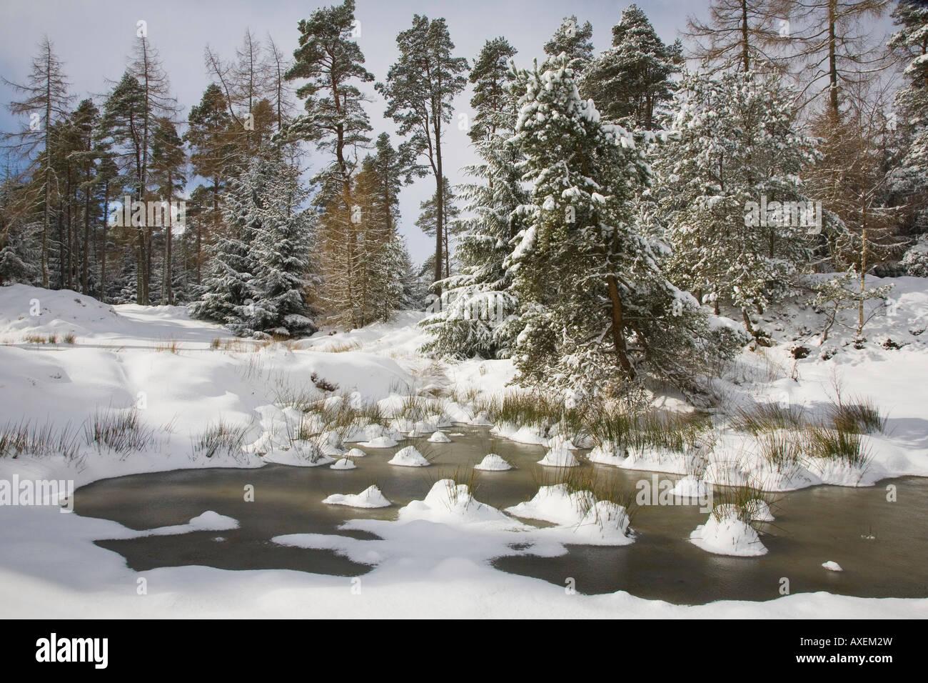Scottish rural winter snow forest landscape, Cairngorms National Park, Scotland uk - Stock Image