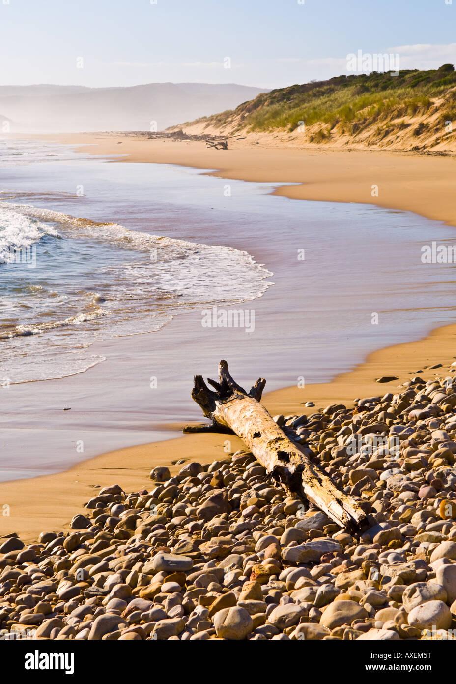 Driftwood on beach. Buffelsbaai. - Stock Image