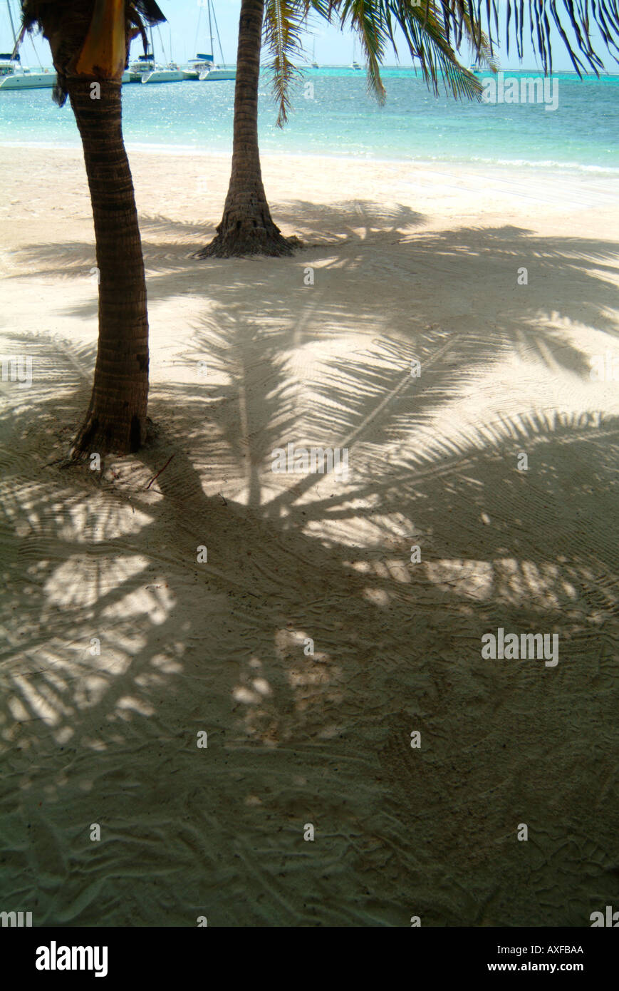 Palm trees on a sandy tropical beach with turquoise waters. Teh high sun is casting shadows of the trees fronds Stock Photo