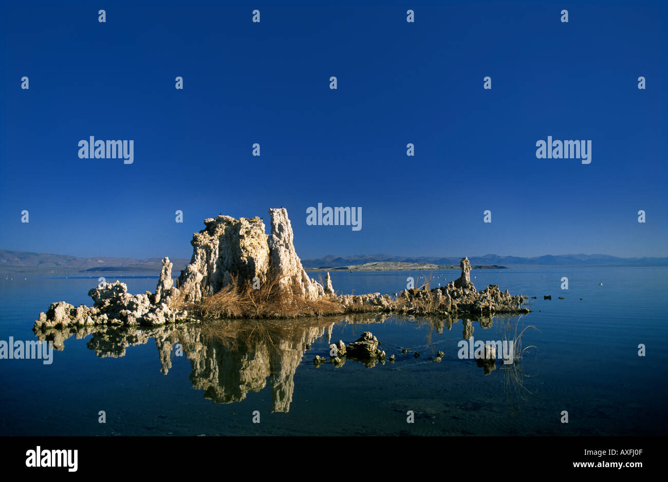 Mineral pillars and halo tolerant plant on Mono Lake California USA - Stock Image