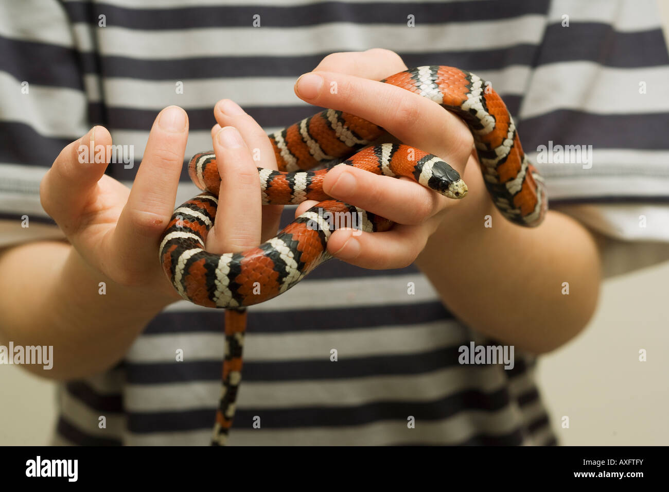 Pet Snake High Resolution Stock Photography And Images Alamy