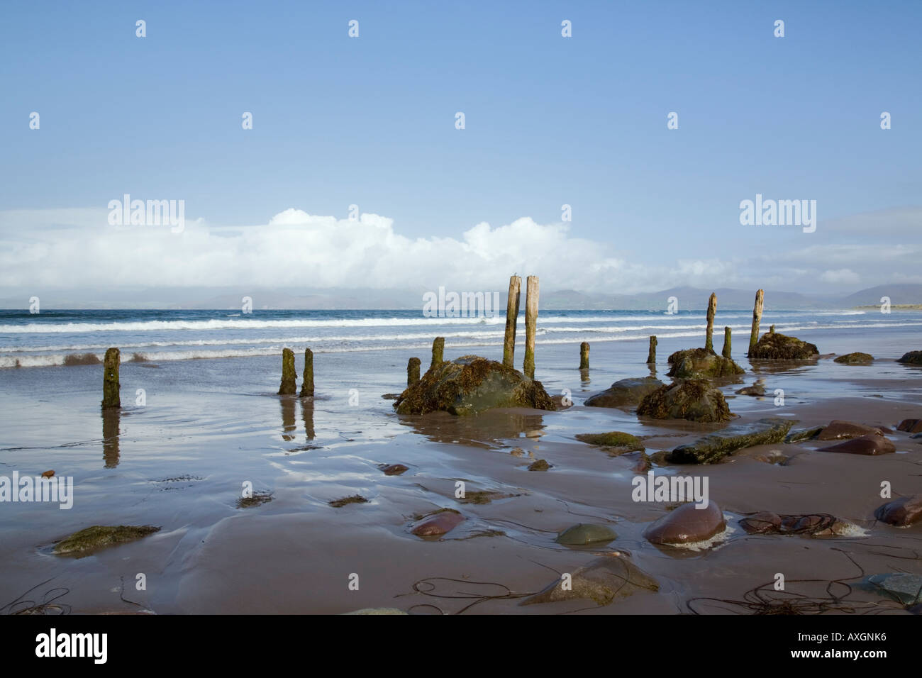 Wooden posts and rocks on wet sand on empty beach of Ross Strand Rossbeigh Co Kerry Eire Europe - Stock Image