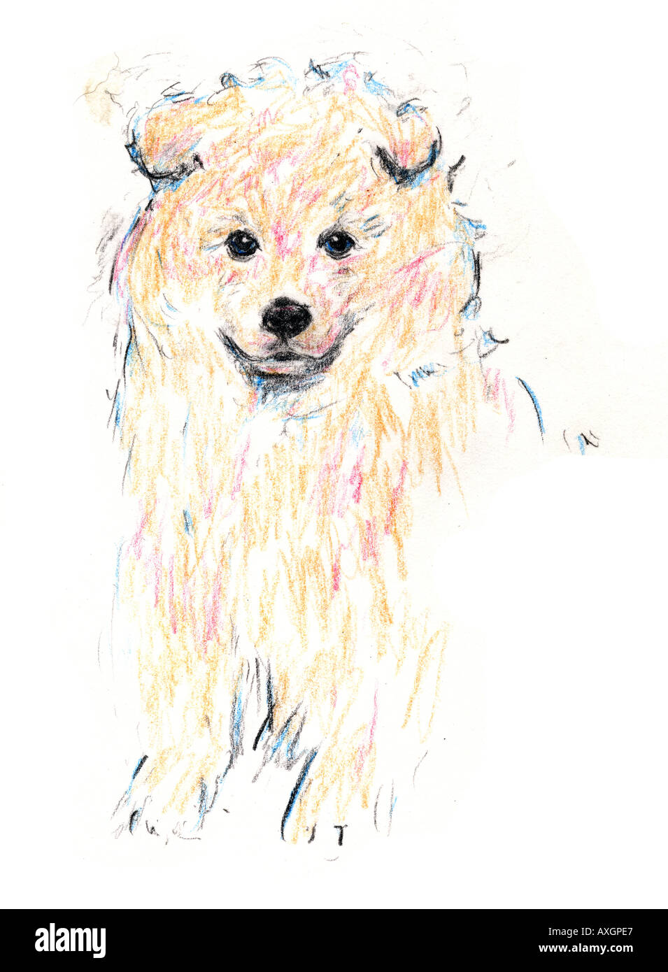 Pomeranian Puppy Stock Photo Alamy
