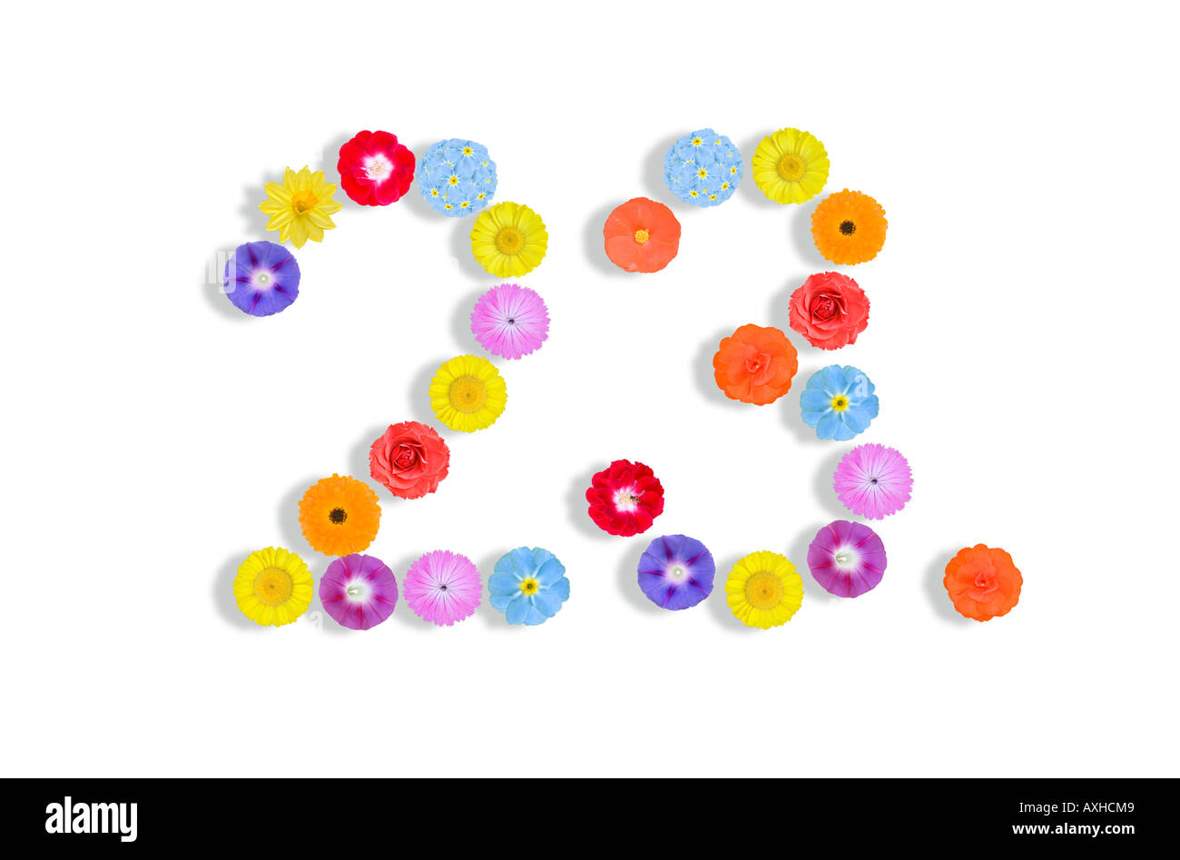numbers written with flowers 23rd - Stock Image