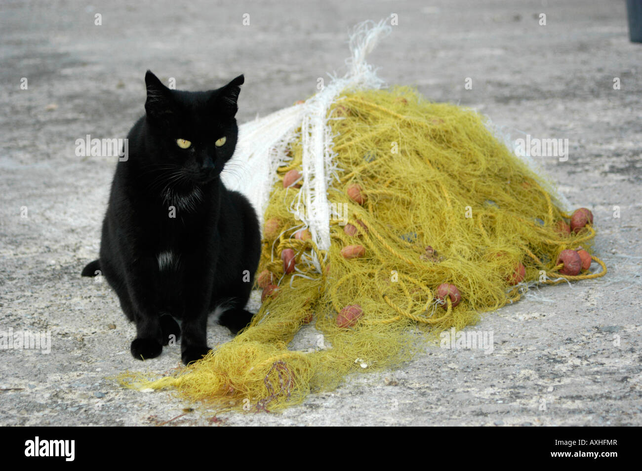 Black cat with yellow eyes sitting next to a yellow fishing net - Stock Image