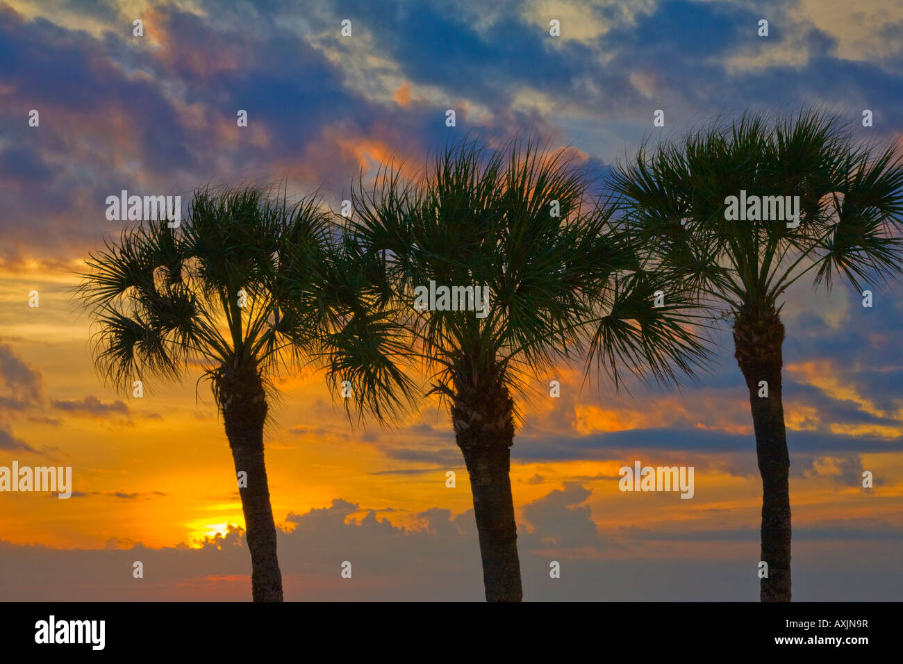 Sunset though three palm trees over the Gulf of Mexico from Fort Myers Beach in Florida Stock Photo
