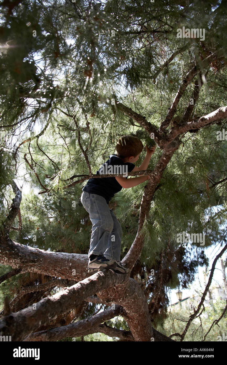 Young boy child climbing in a pine tree in Dexameni Square near Kolonaki district Athens or Athini Greece NAOH - Stock Image