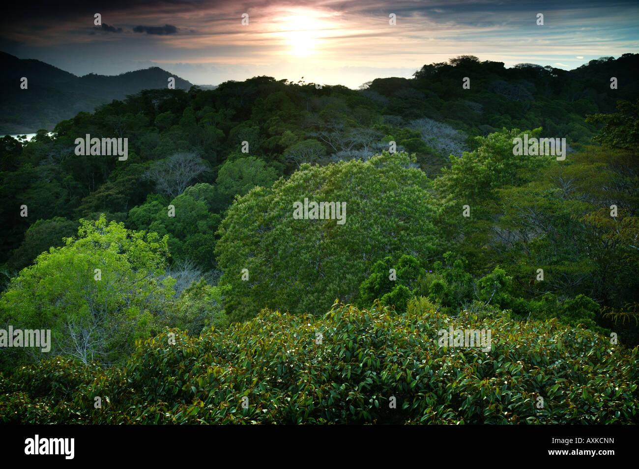 Beautiful sunset in the rainforest of Soberania national park, Republic of Panama. Stock Photo