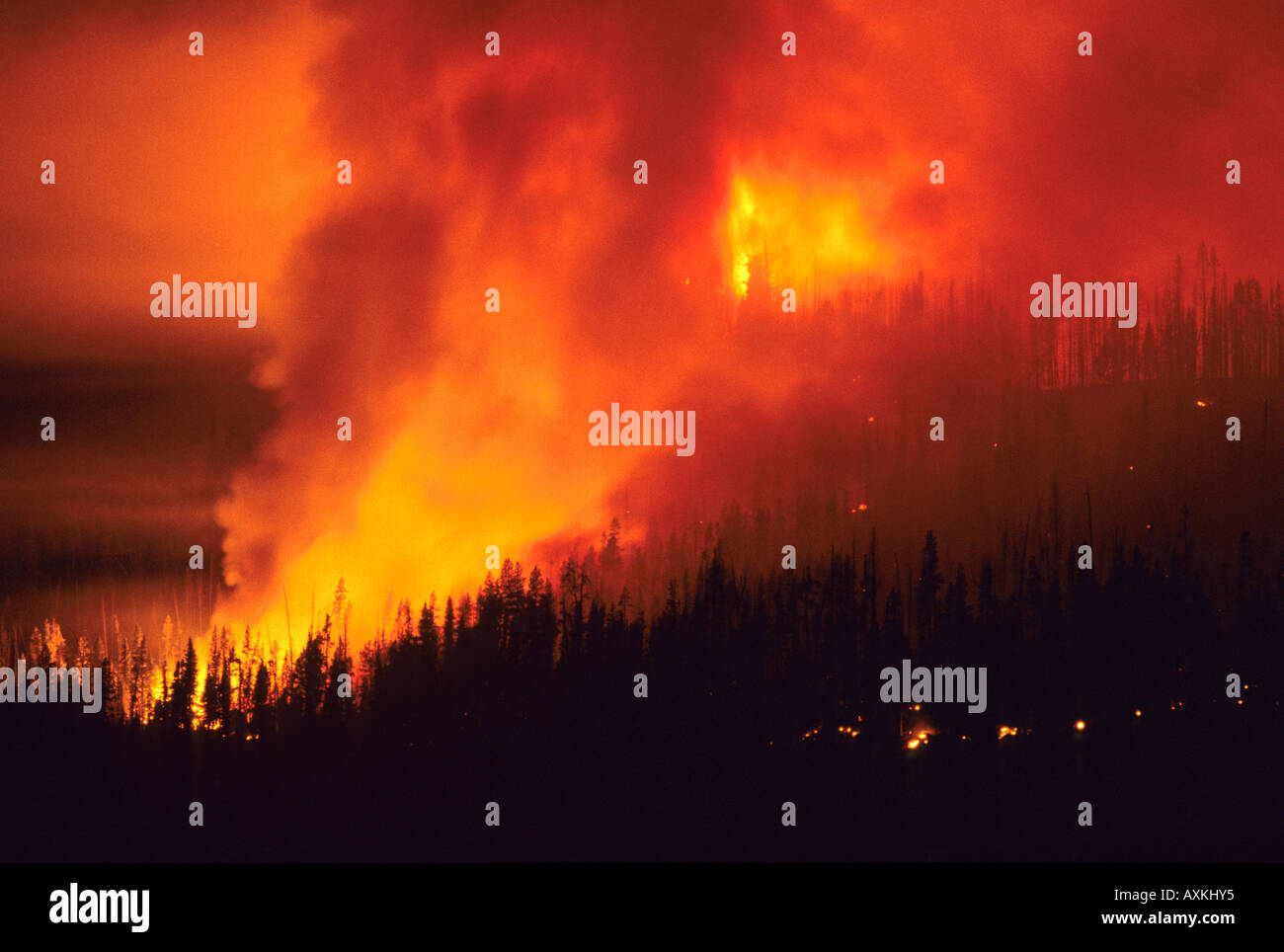 A forest fire at night in the Boise National Forest Idaho - Stock Image