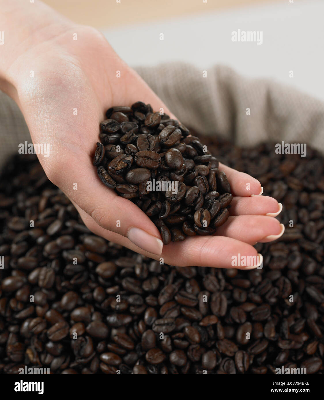Close up of woman s hand holding coffee beans - Stock Image