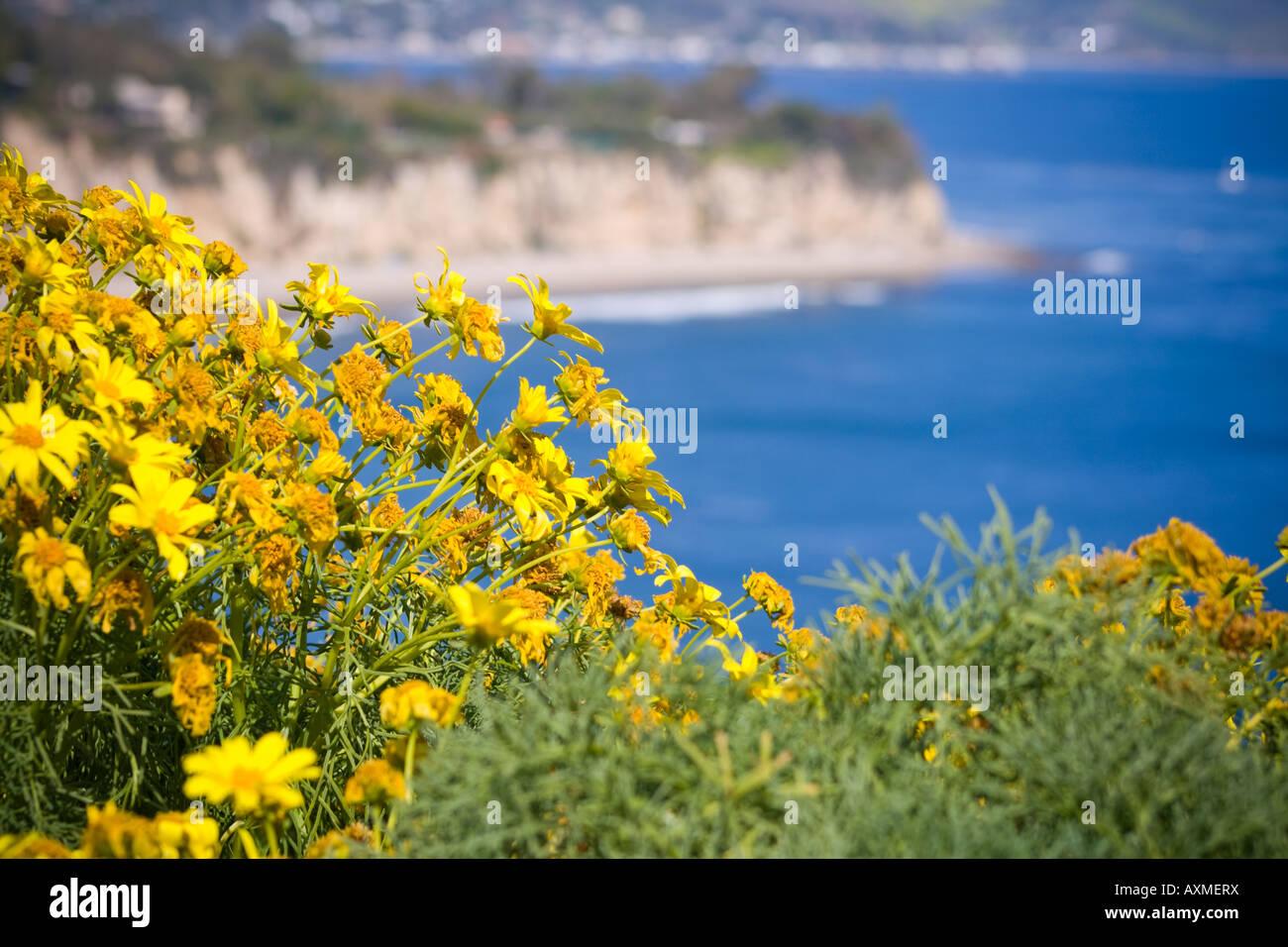 Yellow wildflowers on the cliffs in malibu california stock photo yellow wildflowers on the cliffs in malibu california mightylinksfo