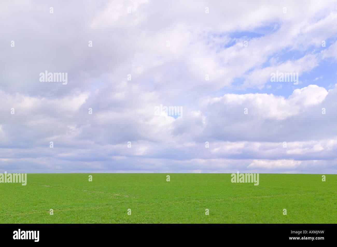 Green field and cloudy sky on a beautiful bright day the grass is nice and fresh after a rain shower - Stock Image