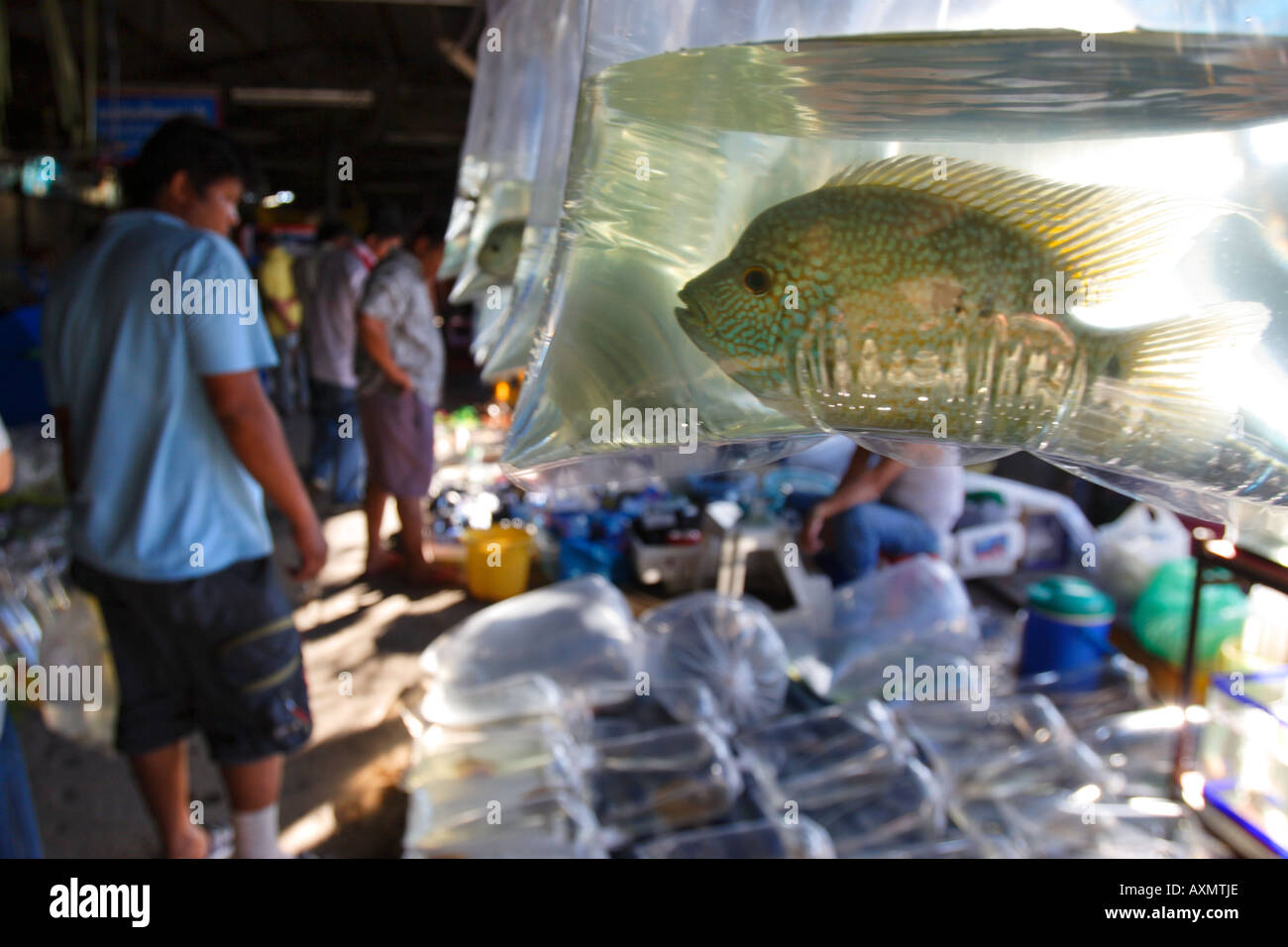 Chatuchak Weekend Market, Bangkok, Thailand. - Stock Image