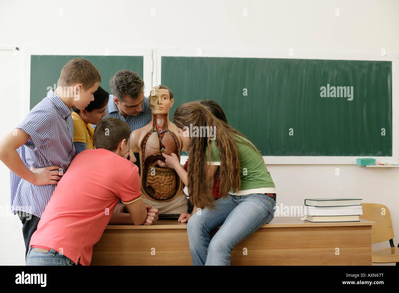 Teacher explaining human anatomy to pupils - Stock Image