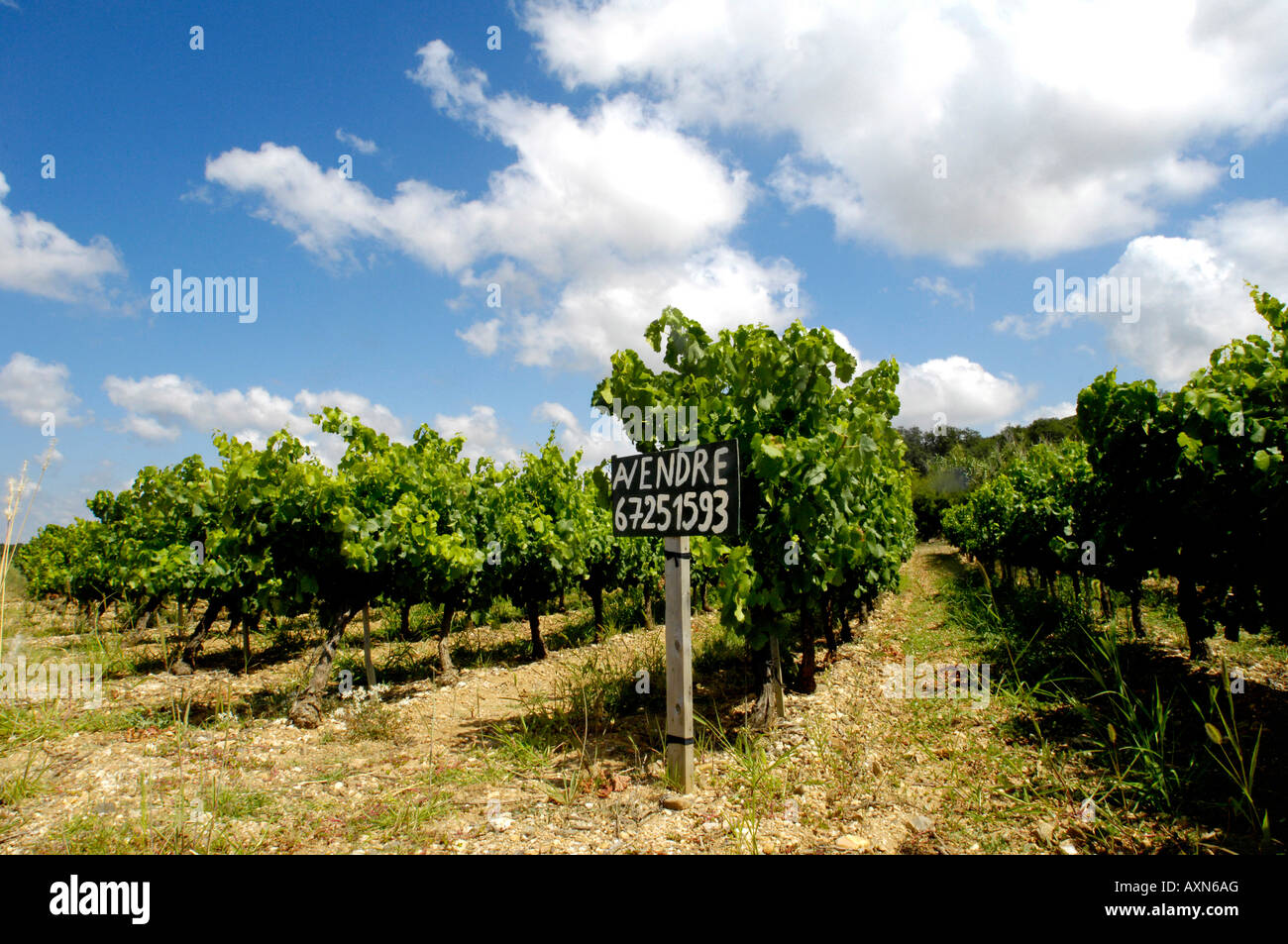 rows of vines in rural french vineyards for sale with rustic sign near, pezenas, languedoc, france - Stock Image