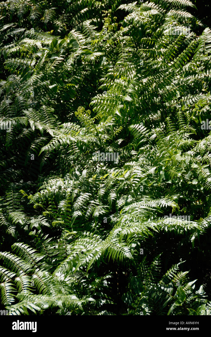 Dense Thicket Stock Photos Amp Dense Thicket Stock Images