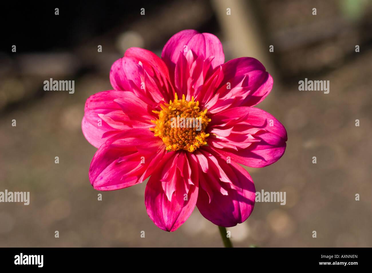 Sarah Thomas Stock Photos & Sarah Thomas Stock Images - Alamy
