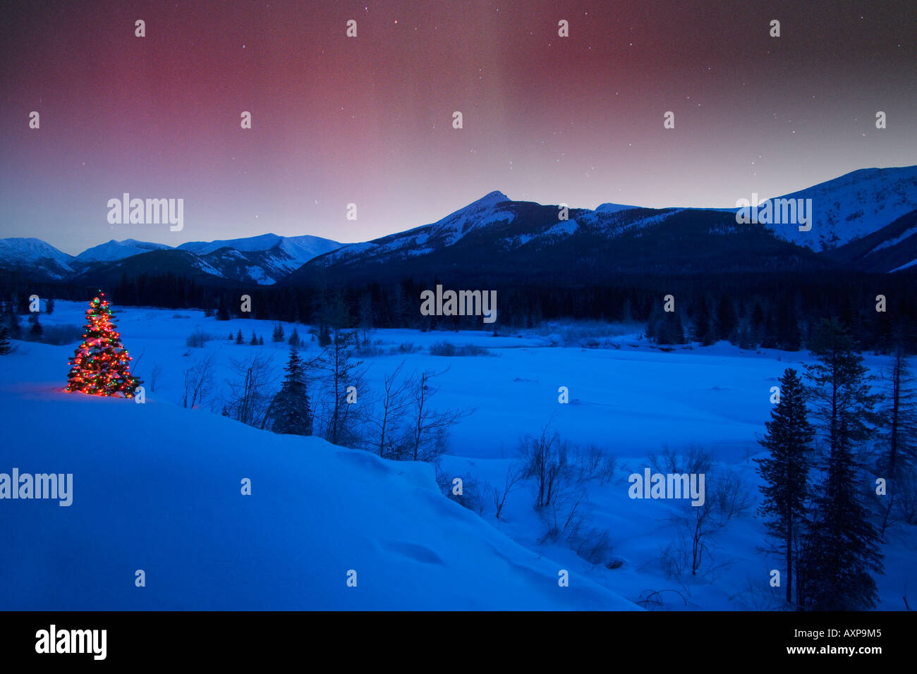 Christmas Tree Under Northern Lights Stock Photo 9653508 Alamy